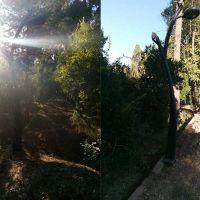پایه چراغ طرح درختی